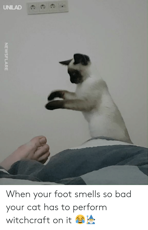 Bad, Dank, and 🤖: NEWSFLARE When your foot smells so bad your cat has to perform witchcraft on it 😂🧙♂️