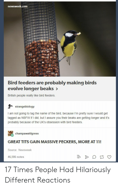 the bird: newsweek.com  Bird feeders are probably making birds  evolve longer beaks>  British people really like bird feeders.  strangebiology  I am not going to tag the name of the bird, because I'm pretty sure I would get  tagged as NSFW if I did, but I assure you their beaks are getting longer and it's  probably because of the UK's obsession with bird feeders.  champawattigress  GREAT TITS GAIN MASSIVE PECKERS, MORE AT 11!  Source: Newsweek  46,586 notes 17 Times People Had Hilariously Different Reactions