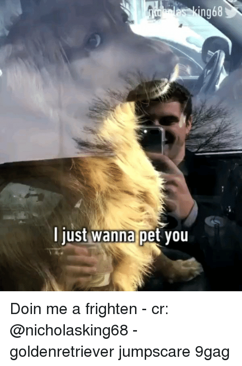 9gag, Memes, and 🤖: ng68  ljust  wanna  pet you Doin me a frighten - cr: @nicholasking68 - goldenretriever jumpscare 9gag