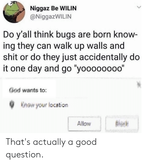 "Dank, God, and Shit: Niggaz Be WILIN  @NiggazWILIN  Do y'all think bugs are born know  ing they can walk up walls and  shit or do they just accidentally do  it one day and go ""yoooooooo""  God wants to:  0Know your location  Allow That's actually a good question."