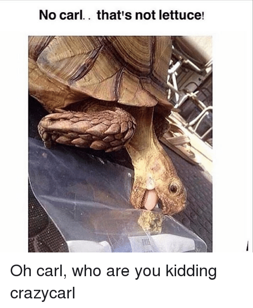 Memes, 🤖, and Who: No carl.. that's not lettuce! Oh carl, who are you kidding crazycarl