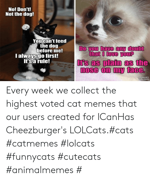 Cats, Irs, and Love: No! Don't!  Not the dog!  Youcan't feed  the dog  before me!  l always go first!  It's a rule!  Do you have any doub  that I love you?  Irs as platn as the  a106401  may 2019 Every week we collect the highest voted cat memes that our users created for ICanHas Cheezburger's LOLCats.#cats #catmemes #lolcats #funnycats #cutecats #animalmemes #