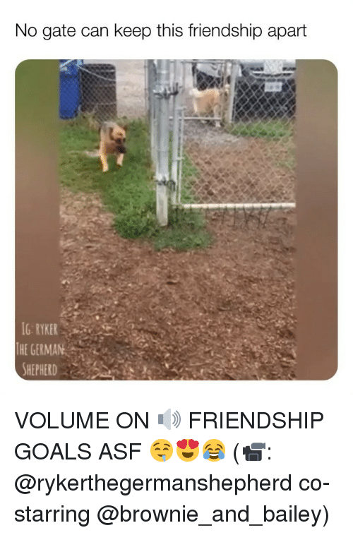 Goals, Memes, and Friendship: No gate can keep this friendship apart  G RYKER  THE GERMAN VOLUME ON 🔊 FRIENDSHIP GOALS ASF 🤤😍😂 (📹: @rykerthegermanshepherd co-starring @brownie_and_bailey)