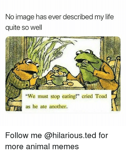 "We Must Stop Eating Cried Toad As He Ate Another: No image has ever described my life  quite so well  We must stop eating"" cried Toad  as he ate another. Follow me @hilarious.ted for more animal memes"