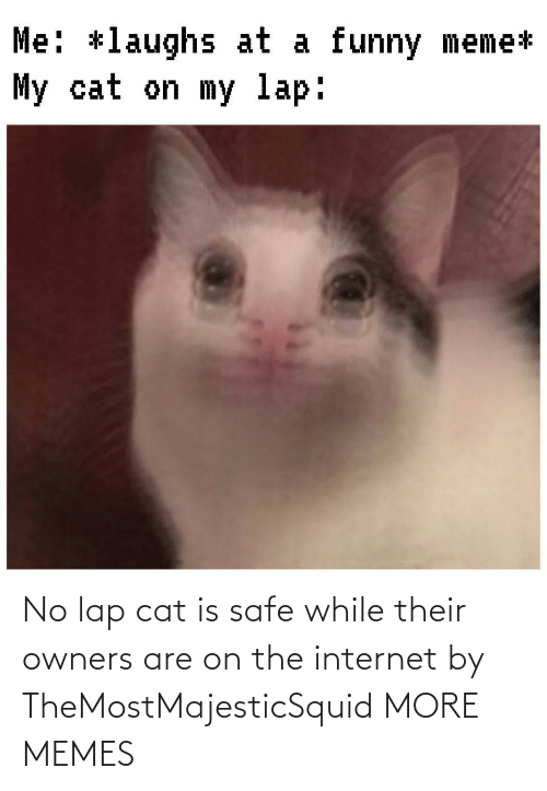 cat: No lap cat is safe while their owners are on the internet by TheMostMajesticSquid MORE MEMES