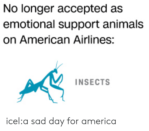 American Airlines: No longer accepted as  emotional support animals  on American Airlines:  INSECTS icel:a sad day for america