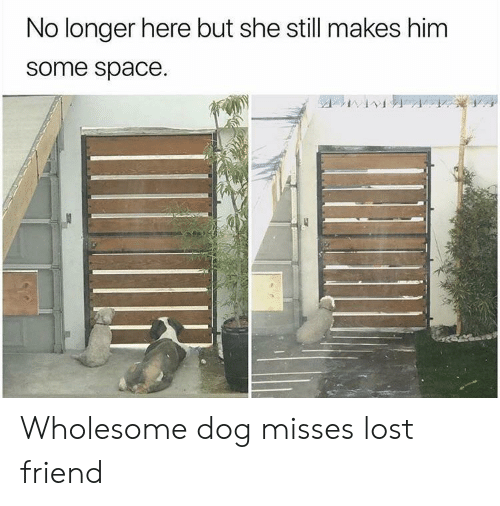 Lost, Space, and Wholesome: No longer here but she still makes him  some space. Wholesome dog misses lost friend