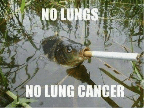 Lunges: NO LUNG CANCER