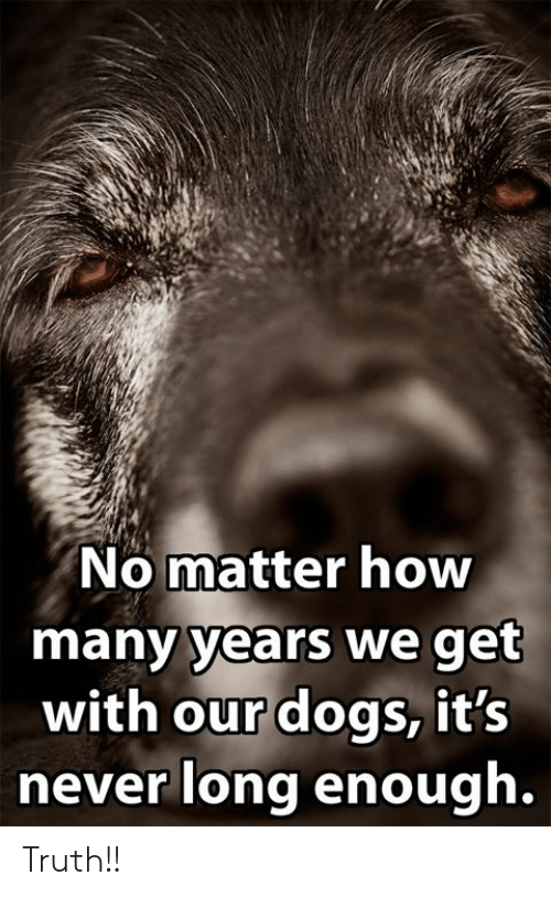 Dogs, Memes, and Never: No matter how  many years we get  with our dogs, it's  never long enough. Truth!!