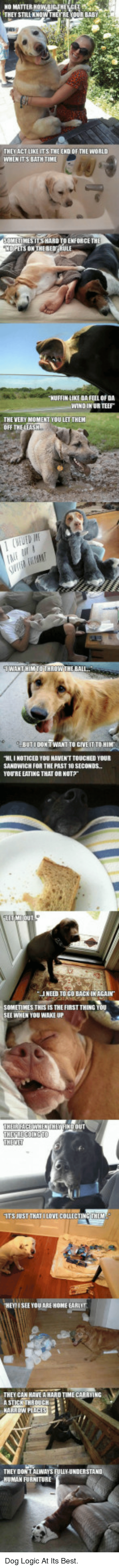 Its The End Of The World: NO MATTER  THEY STILL KNOW THEYRE YOUR BABY  THEPACTLIKE ITS THE END OF THE WORLD  WHEN ITS BATH TIME  HUFFIN LIKE DA FEEL OF DA  WIND IN UR TEEF  THE VERY MOMENT YOU LET THEM  OFF  BUTIDONIT WANT TO GIVE IT TO HI  HI I NOTICED YOU HAVEN'T TOUCHED YOUR  SANDWICH FOR THE PAST 1O SECONDS  YOU'RE EATING THAT OR NOT 。  I NEED TO GO BACK IN AGAIN  SOMETIMES THES IS THE FIRST THINE  SEE WHEN YOU WAKE UP  THECREGOINCTO  THEMET  ITS JUST THAT ILOVE COLLECTING THE  I SEE YOU ARE HONE EARIUT  THEY CAN HAVE A HARD TIME CARRYING  THEY DON T ALWAYS FULIY-UNDERSTAND  MAN FURNITURE <p>Dog Logic At Its Best.</p>
