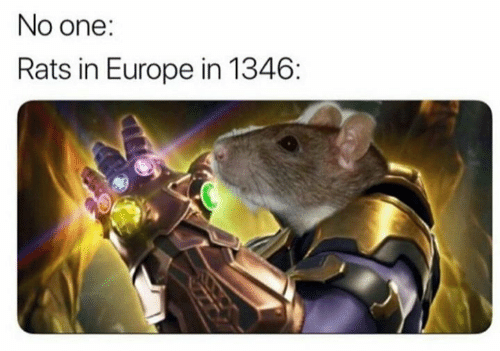 Europe, One, and  No: No one:  Rats in Europe in 1346