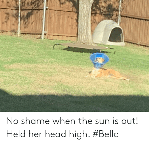 bella: No shame when the sun is out! Held her head high. #Bella