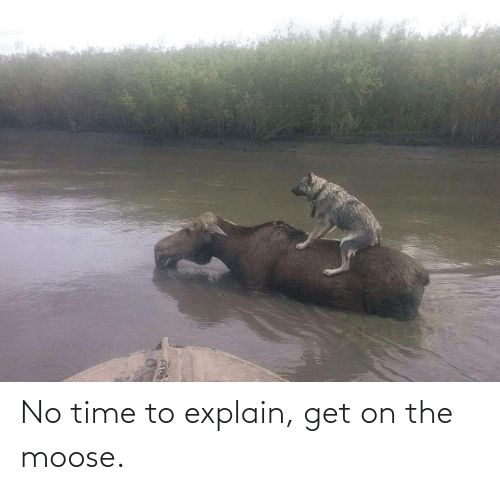 no time: No time to explain, get on the moose.