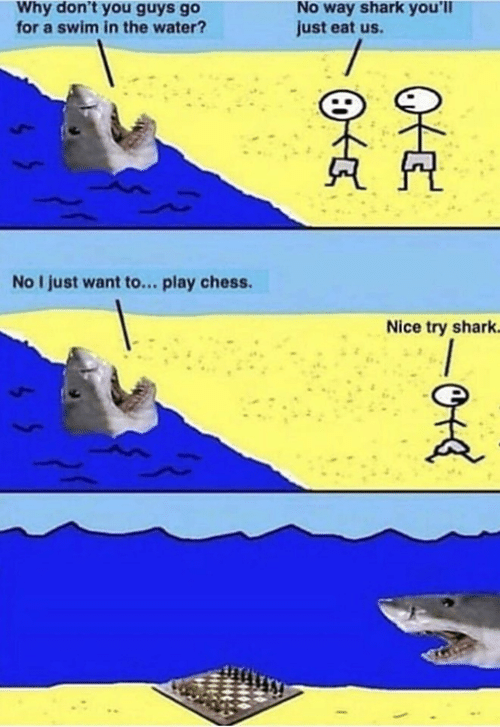 nice try: No way shark you'll  just eat us.  Why don't you guys go  for a swim in the water?  No I just want to... play chess  Nice try shark