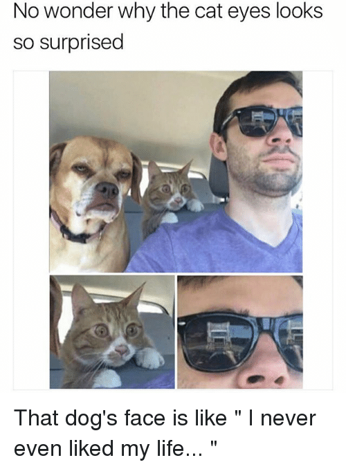 "Dog Faces: No wonder why the cat eyes looks  so surprised That dog's face is like "" I never even liked my life... """