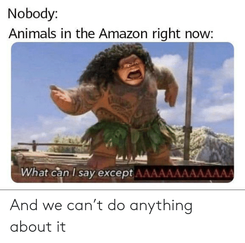 what can i say: Nobody:  Animals in the Amazon right now:  What can I say except AAAAAAAAAAAAA And we can't do anything about it
