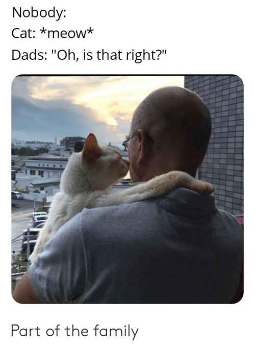 """meow: Nobody:  Cat: *meow*  Dads: """"Oh, is that right?"""" Part of the family"""
