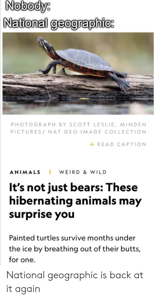 Animals, Reddit, and Weird: Nobody  National geographic  PHOTOGRAPH BY SCOTT LESLIE, MINDEN  PICTURES/NAT GEO IMAGE COLLECTION  +READ CAPTION  ANIMALS WEIRD &WILD  It's not just bears: These  hibernating animals may  surprise you  Painted turtles survive months under  the ice by breathing out of their butts,  for one. National geographic is back at it again