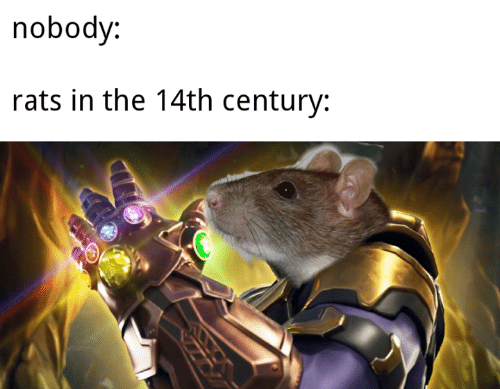 Memes, 🤖, and Nobody: nobody:  rats in the 14th century: