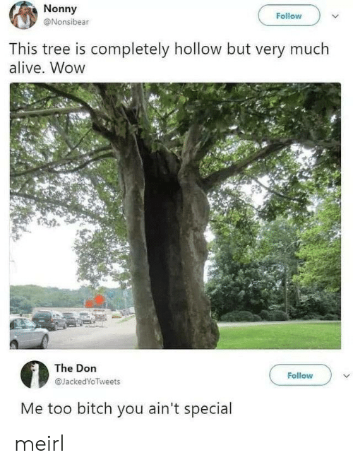 Alive, Bitch, and Wow: Nonny  Follow  @Nonsibear  This tree is completely hollow but very much  alive. Wow  The Don  Follow  @JackedYoTweets  Me too bitch you ain't special meirl