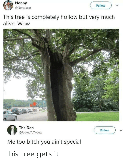 Alive, Bitch, and Wow: Nonny  Follow  @Nonsibear  This tree is completely hollow but very much  alive. Wow  The Don  Follow  @JackedYoTweets  Me too bitch you ain't special This tree gets it