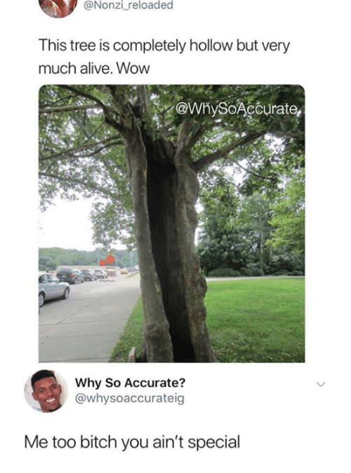 Alive, Bitch, and Funny: @Nonzi reloaded  This tree is completely hollow but very  much alive. Wow  ewnySoAcourate,  Why So Accurate?  @whysoaccurateig  Me too bitch you ain't special
