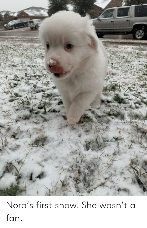 nora: Nora's first snow! She wasn't a fan.