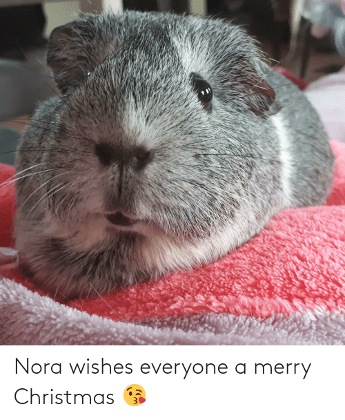 nora: Nora wishes everyone a merry Christmas 😘