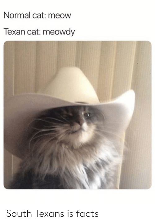 Dank, Facts, and Texans: Normal cat: meow  Texan cat: meowdy South Texans is facts