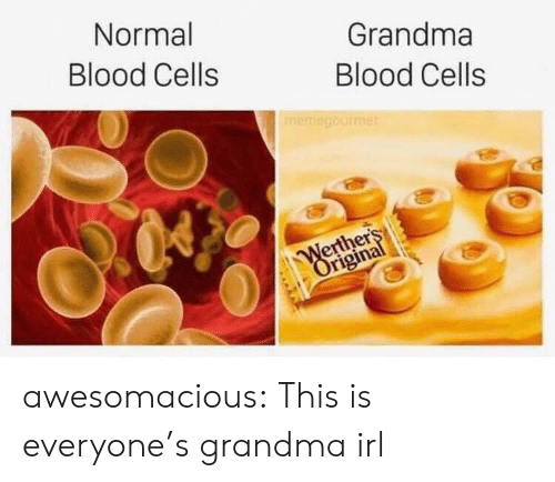 Grandma, Tumblr, and Blog: Normal  Grandma  Blood Cells  Blood Cells  memegourmet  Werthers  Original awesomacious:  This is everyone's grandma irl
