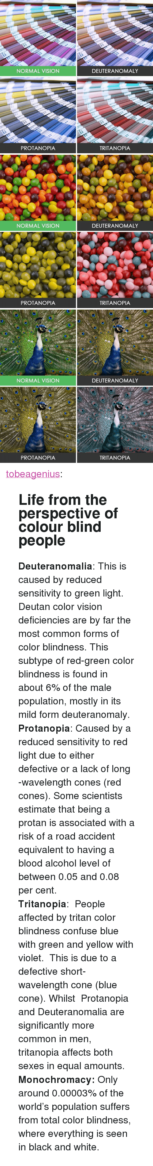 """Life, Tumblr, and Vision: NORMAL VISION  DEUTERANOMALY  PROTANOPIA  TRITANOPIA   ce  NORMAL VISION  DEUTERANOMALY  PROTANOPIA  TRITANOPIA   NORMAL VISION  DEUTERANOMALY  e)  PROTANOPIA  TRITANOPIA <p><a href=""""http://tobeagenius.tumblr.com/post/157332646070/life-from-the-perspective-of-colour-blind-people"""" class=""""tumblr_blog"""">tobeagenius</a>:</p><blockquote> <h2>Life from the perspective of colour blind people</h2> <p><b>Deuteranomalia</b>: This is caused by reduced sensitivity to green light. Deutan color vision deficiencies are by far the most common forms of color blindness. This subtype of red-green color blindness is found in about 6% of the male population,   mostly in its mild form deuteranomaly.   <br/></p> <p><b>  Protanopia</b>: Caused by a reduced sensitivity to red light due to either defective or a lack of long   -wavelength cones (red cones). Some scientists estimate that being a protan is associated with a risk of a road accident equivalent to having a blood alcohol level of between 0.05 and 0.08 per cent.  <br/></p> <p><b>Tritanopia</b>: People affected by tritan color blindness confuse blue with green and yellow with violet. This is due to a defective short-wavelength cone (blue cone). Whilst  Protanopia andDeuteranomalia are significantly more common in men, tritanopia affects both sexes in equal amounts.</p> <p><b>  Monochromacy: </b>Only around 0.00003% of the world's population suffers from total color blindness, where everything is seen in black and white.</p> </blockquote>"""
