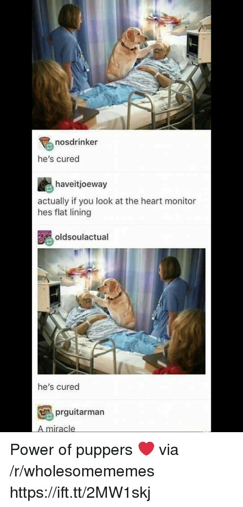 Heart, Power, and Via: nosdrinker  he's cured  haveitjoeway  actually if you look at the heart monitor  hes flat lining  oldsoulactual  he's cured  prguitarman  A miracle Power of puppers ❤ via /r/wholesomememes https://ift.tt/2MW1skj