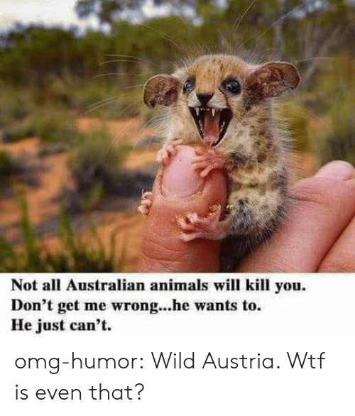 Animals, Omg, and Tumblr: Not all Australian animals will kill you.  Don't get me wrong...he wants to.  He just can't omg-humor:  Wild Austria. Wtf is even that?