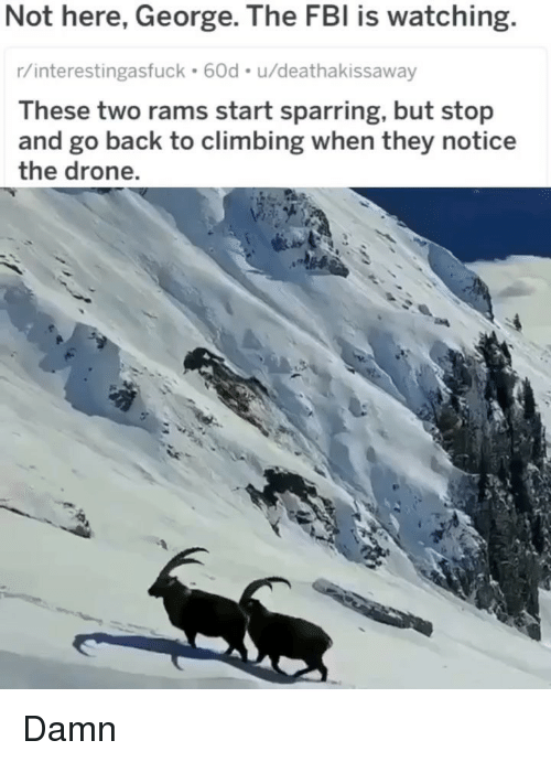 Climbing, Drone, and Fbi: Not here, George. The FBI is watching.  r/interestingasfuck 60d. u/deathakissaway  These two rams start sparring, but stop  and go back to climbing when they notice  the drone. Damn