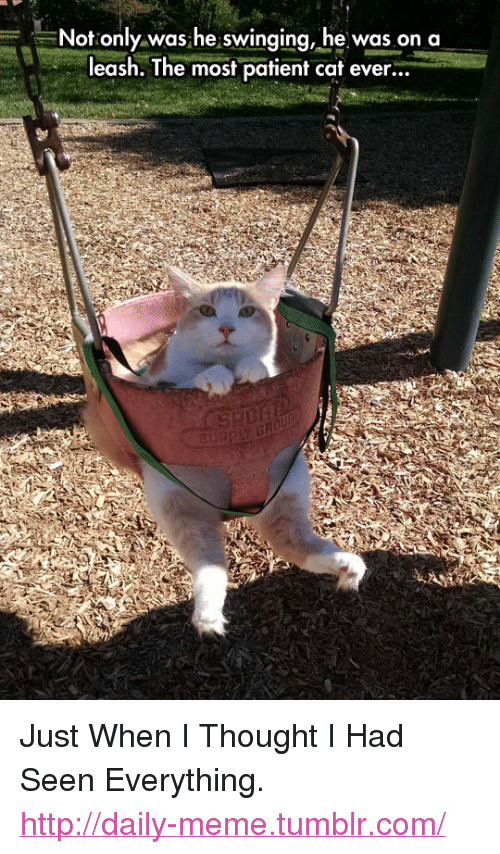 "On A Leash: Not only was he swinging, he was on a  leash. The most patient cat ever...  3u <p>Just When I Thought I Had Seen Everything.<br/><a href=""http://daily-meme.tumblr.com""><span style=""color: #0000cd;""><a href=""http://daily-meme.tumblr.com/"">http://daily-meme.tumblr.com/</a></span></a></p>"