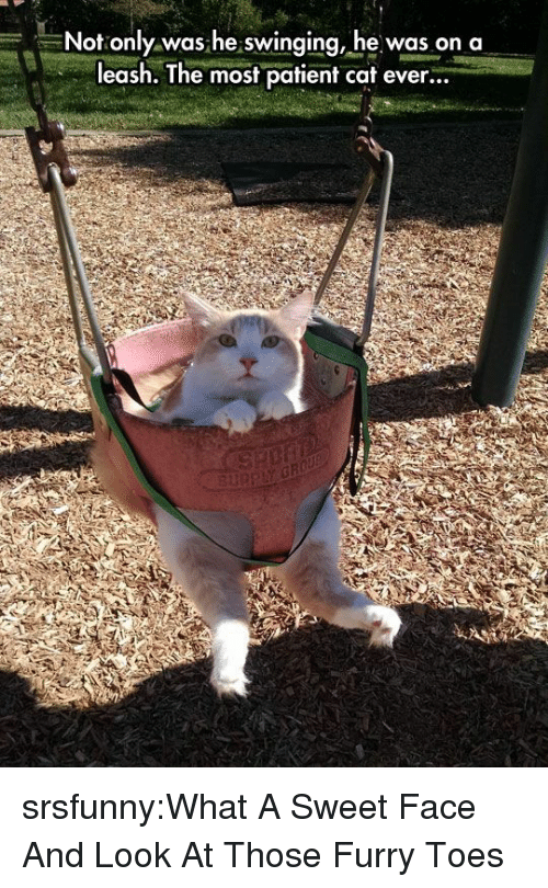 On A Leash: -,--Not only was he swinging, he was on a  leash. The most patient cat ever... srsfunny:What A Sweet Face And Look At Those Furry Toes