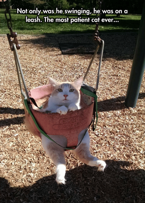 Patient, Cat, and Swinging: Not only was he swinging, he was on a  leash. The most patient cat ever...  3u