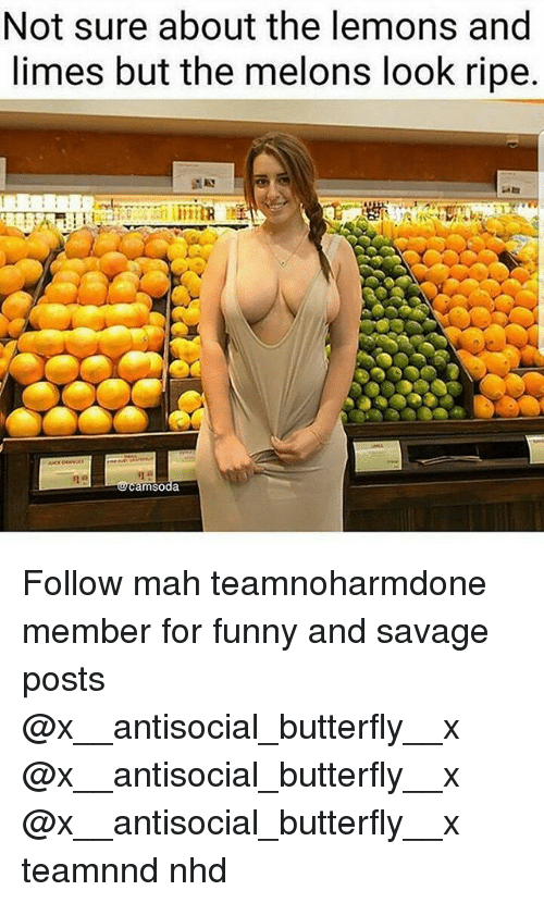 melons: Not sure about the lemons and  limes but the melons look ripe Follow mah teamnoharmdone member for funny and savage posts @x__antisocial_butterfly__x @x__antisocial_butterfly__x @x__antisocial_butterfly__x teamnnd nhd