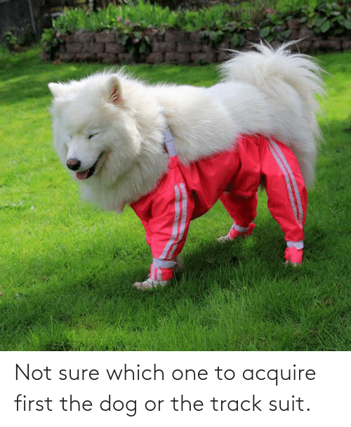 acquire: Not sure which one to acquire first the dog or the track suit.