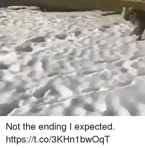 Relatable, Expected, and Ending: Not the ending I expected. https://t.co/3KHn1bwOqT