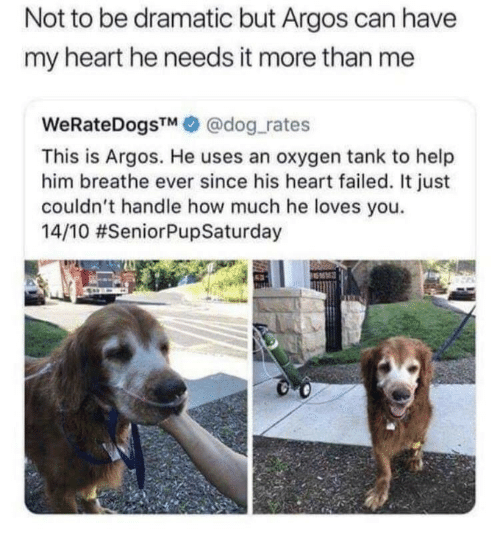 Heart, Help, and Oxygen: Not to be dramatic but Argos can have  my heart he needs it more than me  WeRateDogsTM@dog rates  This is Argos. He uses an oxygen tank to help  him breathe ever since his heart failed. It just  couldn't handle how much he loves you.  14/10