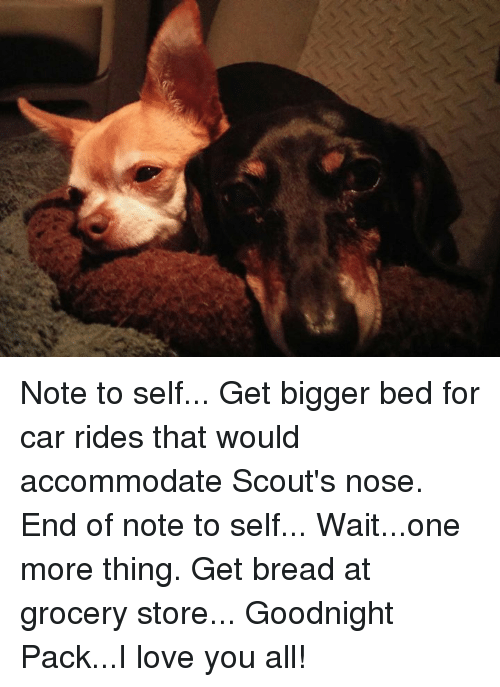 accommodating: Note to self... Get bigger bed for car rides that would accommodate Scout's nose. End of note to self... Wait...one more thing. Get bread at grocery store...  Goodnight Pack...I love you all!