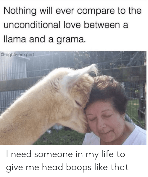lama: Nothing will ever compare to the  unconditional love between a  lama and a grama  @highfiveexpert I need someone in my life to give me head boops like that