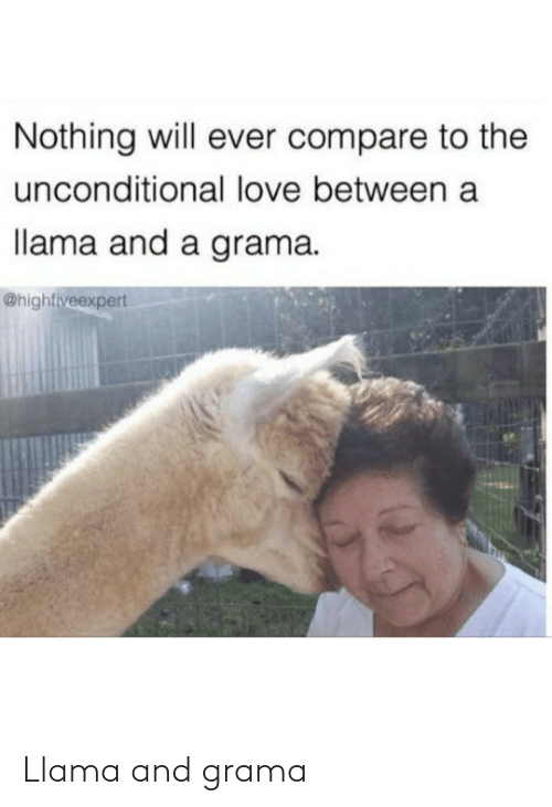 Between: Nothing will ever compare to the  unconditional love between a  llama and a grama.  @highfiveexpert Llama and grama