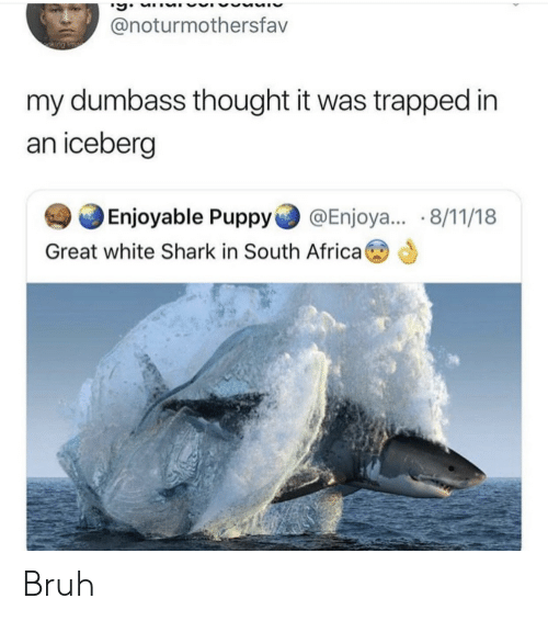 Africa, Bruh, and Shark: @noturmothersfav  my dumbass thought it was trapped in  an iceberçg  Enjoyable Puppy@Enjoya... 8/11/18  Great white Shark in South Africa Bruh