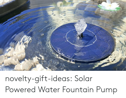 Tumblr, Blog, and Water: novelty-gift-ideas:  Solar Powered Water Fountain Pump