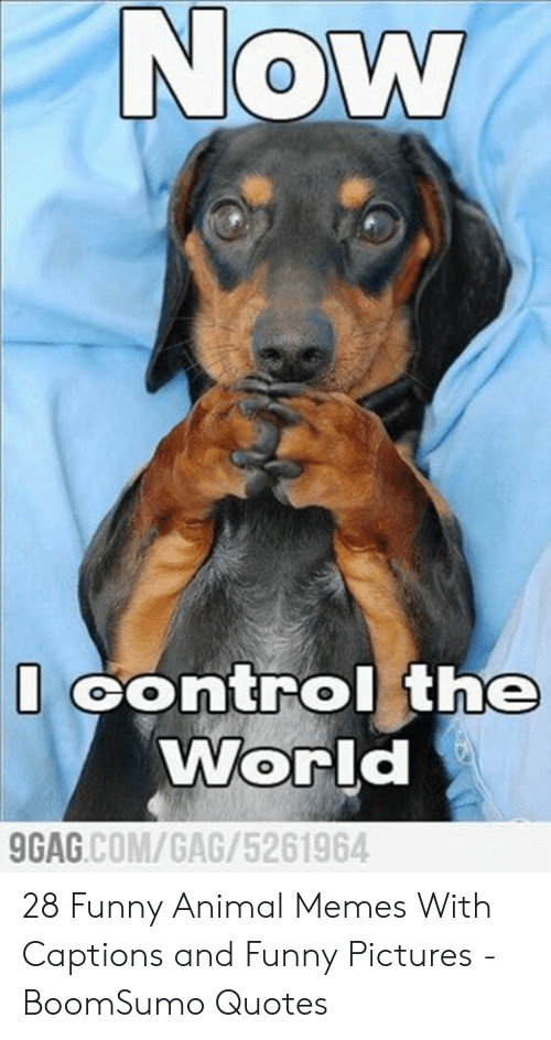 Funny, Memes, and Control: Now  Control the  World  GAG.COM/GAG/5261964 28 Funny Animal Memes With Captions and Funny Pictures - BoomSumo Quotes