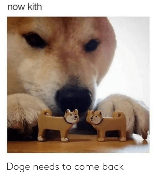 Doge, Back, and Now: now kith Doge needs to come back