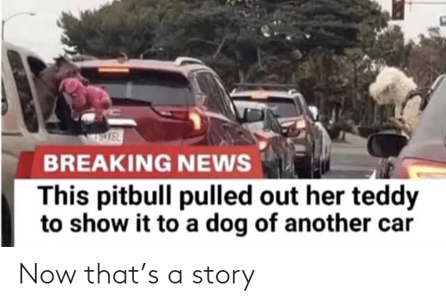 story: Now that's a story