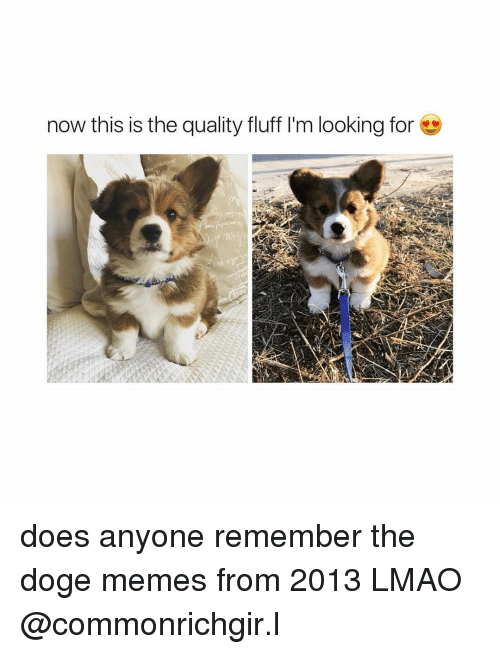 Doge Meme: now this is the quality fluff l'm looking for does anyone remember the doge memes from 2013 LMAO @commonrichgir.l
